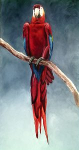 Ara rouge  Huile sur toile 80 x 40 cm